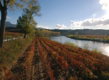 Tours por viñedos