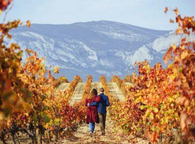 Amelí Rioja Tours - Vineyards & wine in Rioja